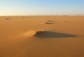 Cesta do vlastního srdce přes poušť