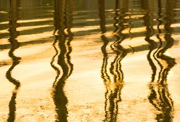Zlatý stín