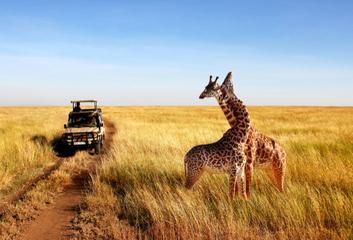 Tanzanie – čistá a voňavá Afrika